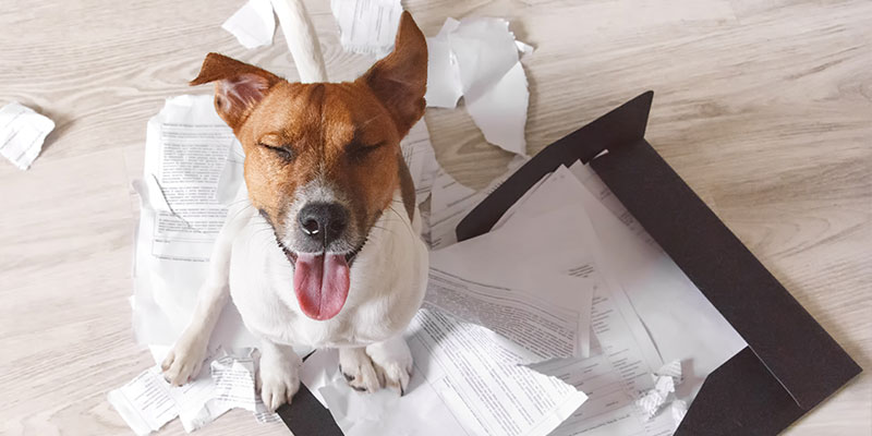 dog with tongue out of its mouth sitting on papers